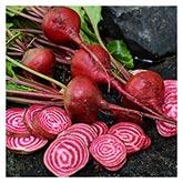 Territorial Seeds - Chioggia Beet