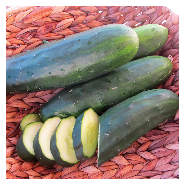 Territorial Seeds - Marketmore Cucumber