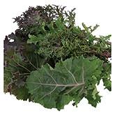 Territorial Seeds - Wild Garden Kales