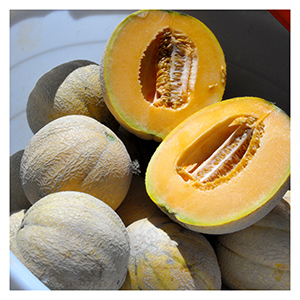 Territorial Seeds - Delicious 51 Cantaloupe