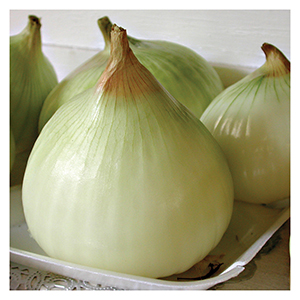 Territorial Seeds - Walla Walla Sweet Onion