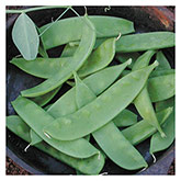 Territorial Seeds - Oregon Sugar Pod Pea