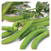 Territorial Seeds - Sugar Ann Snap Pea