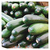 Territorial Seeds - Black Beauty Summer Squash