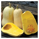 Territorial Seeds - Waltham Butternut Winter Squash
