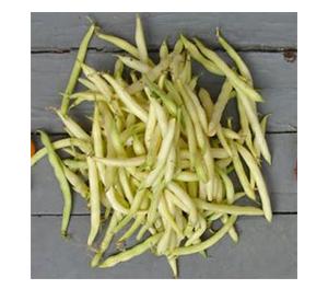 Terroir Seeds - Golden Wax Beans
