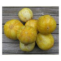Terroir Seeds - True Lemon Cucumber