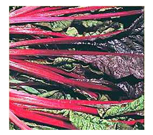 Terroir Seeds - Rhubarb Swiss Chard