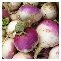 Terroir Seeds - Purple Top Globe Turnip