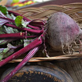 Terroir Seeds - Bull's Blood Beets