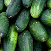Terroir Seeds - Boston Pickling Cucumber