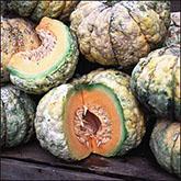 Terroir Seeds - Prescott Fond Blanc Melon