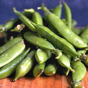 Terroir Seeds - Sugar Ann Snap Peas