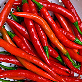 Terroir Seeds - Cayenne Long Slim Pepper