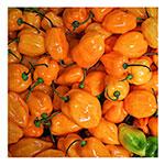 NS/S Chile Seeds - Orange Habañero Chile Pepper