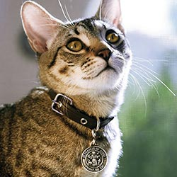 Saint Francis Cat Medal