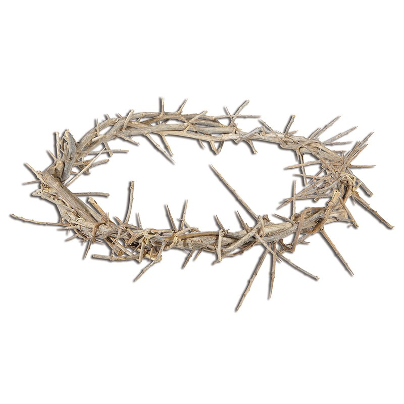 "11"" Crown of Thorns"