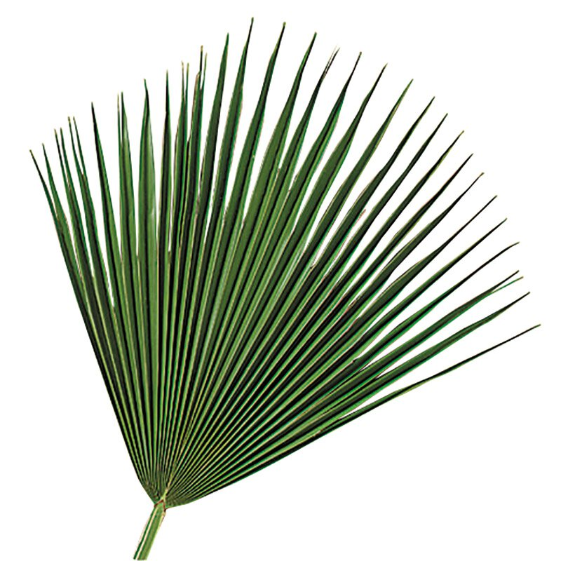 Fan Palms - 4/bag
