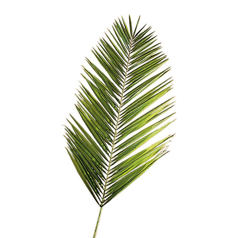 Date Palms - 4/bag