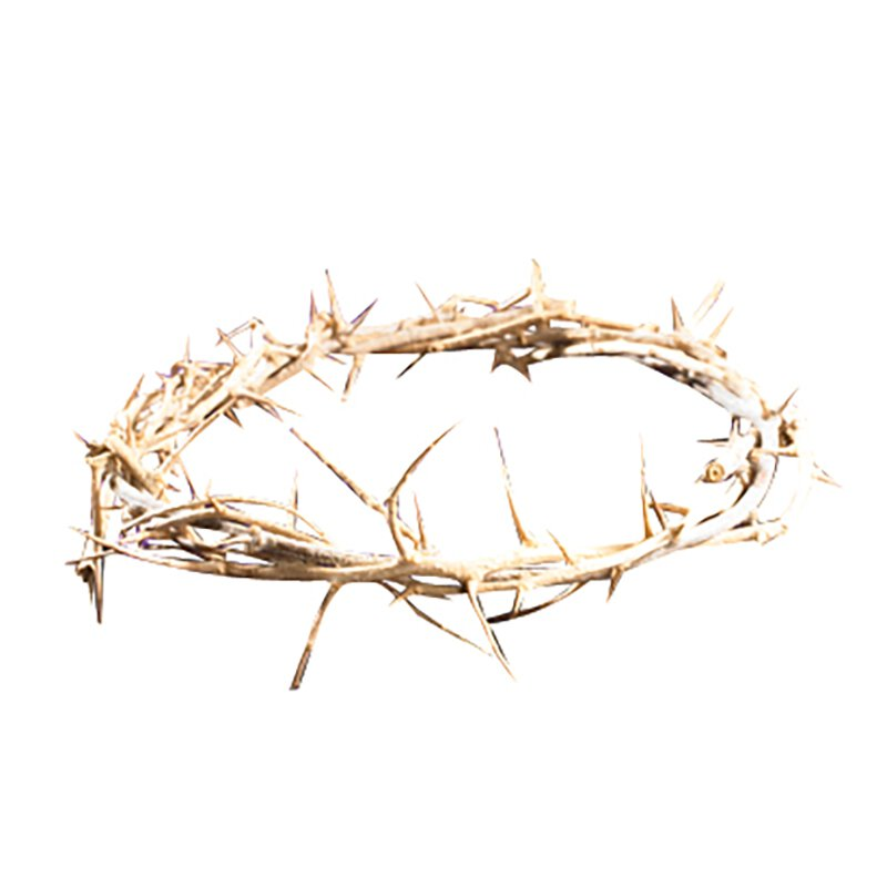 "6"" Crown of Thorns"