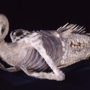 A version of Barnum's Feejee Mermaid. It may actually be his... in true Barnum fashion, the origins are unknown
