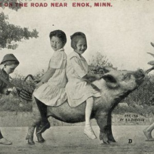 """Riding a Pig by Alfred Stanley Johnson, 1916. Two girls wearing white dresses ride a pig, sitting back-to-back. One girl holds the pig's tail and the other holds its ears. A boy pokes the pig's haunch with a pitchfork. In front, a barefoot boy lures the pig down the road with a husk of corn. Red text in the upper left bears the inscription, """"Scene on the road near Enok, Minn."""" Source: Wisconsin Historical Society"""