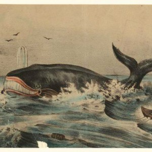 """""""Whalers Heading Towards A Whale"""" Source: The New York Public Library Digital Collections"""