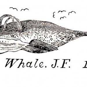 """Jonathan Fisher woodcut, published in the 1833 book """"Scripture Animals,"""" courtesy of the Jonathan Fisher Memorial, Blue Hill, Maine."""