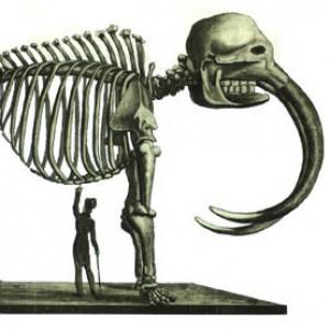 Charles Peale's Mastodon skeleton. By Édouard de Montulé,1816.