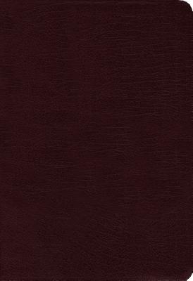 Contemporary Comparative Side-By-Side Bible-PR-NIV/NKJV/NLT/MS