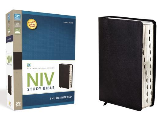 Study Bible-NIV-Large Print