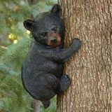 Bear Cub Up A Tree Animal Tree Hugger