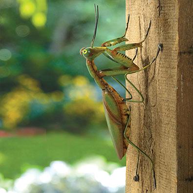 Praying Mantis Garden Sculpture