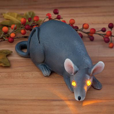 Beady Eyed Grey Rat