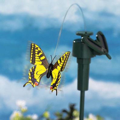 Solar Yellow Swallowtail Fluttering Butterfly