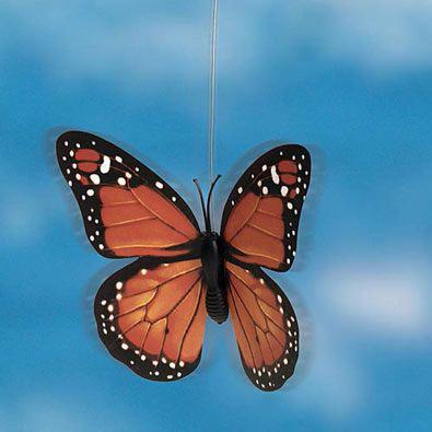 Solar Orange Monarch Fluttering Butterfly