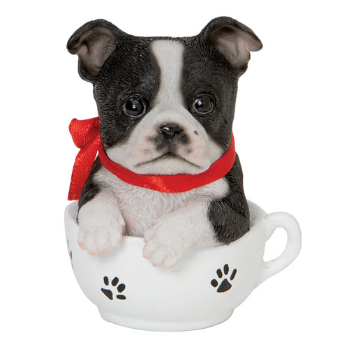 Teacup Puppies - Boston Terrier