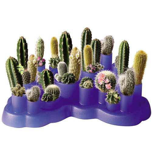 Cactus Garden Greenhouse Kit