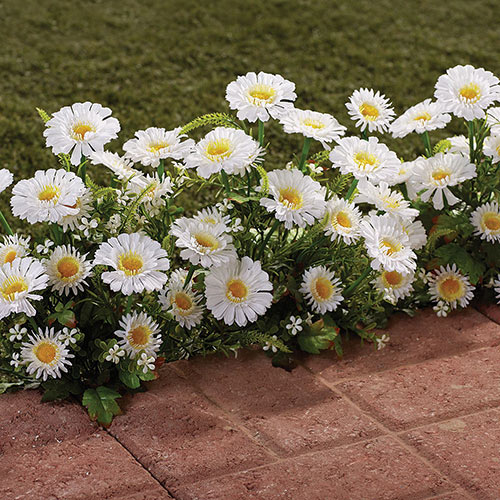 All Weather Forever Blooms- White Daisy