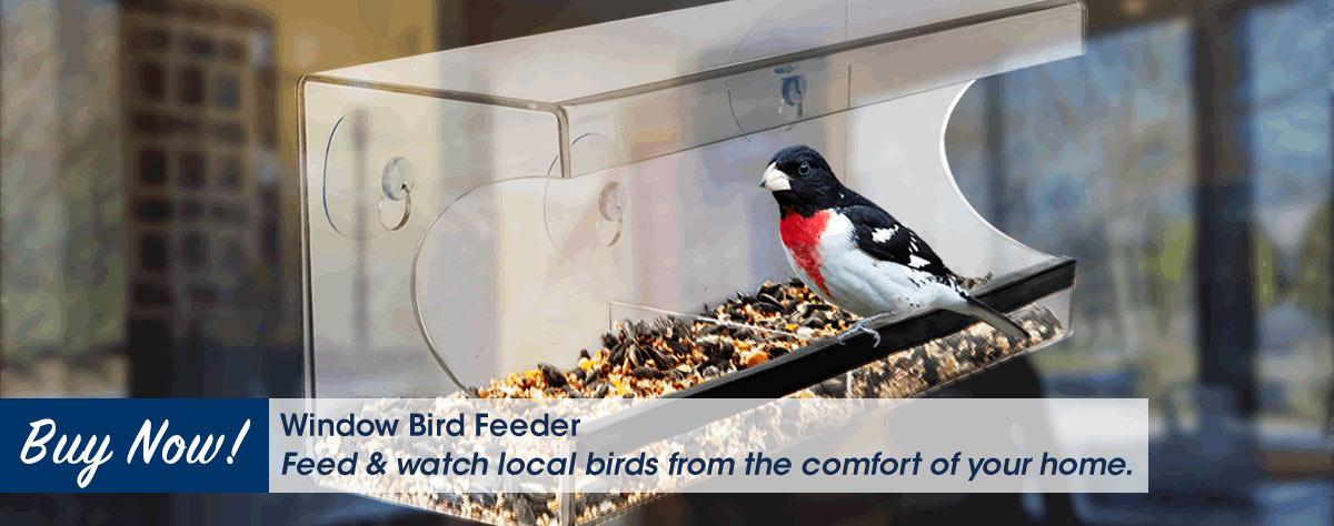 Window Bird Feeder