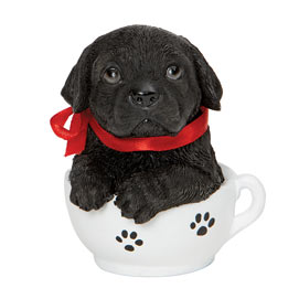 Black Lab Teacup Puppy
