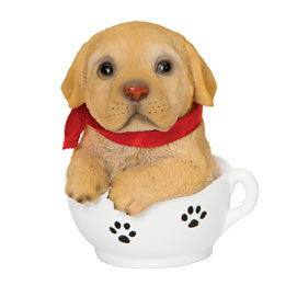 Golden Retrieve Teacup Puppy
