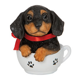 Dachshund Teacup Puppy