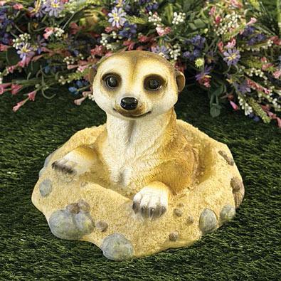 Peeking Meerkat