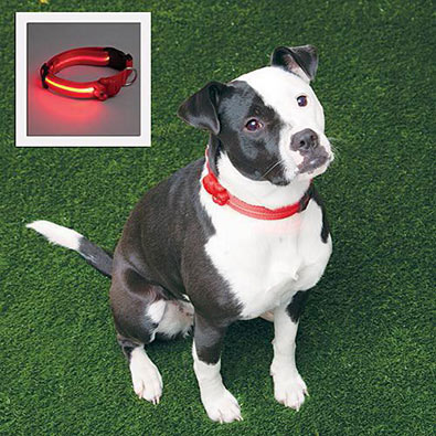 Adjustable LED Dog Collar - Red