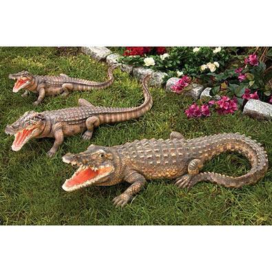 Crikey It's A Croc!