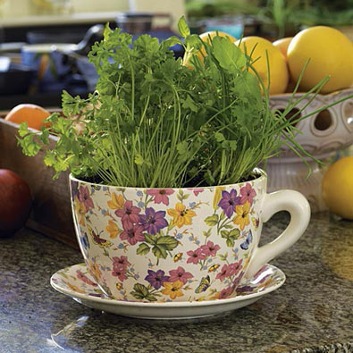 Magnificent Tea Cup & Saucer Planter