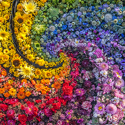 flowers by color in a field