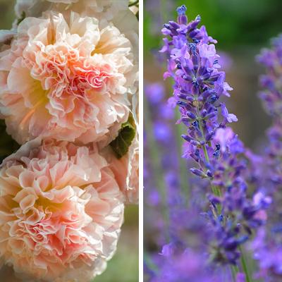 Creative Color Combinations Articles Blogs Botanical Interests