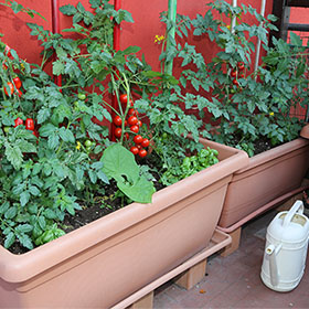 Easy Patio Gardening!